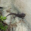 Siamese Leaf-toed Gecko