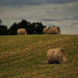 by Denise O'Hern - Landscapes Prairies, Meadows & Fields