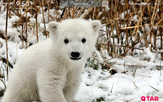Polar Bear Wallpapers New Tab Theme