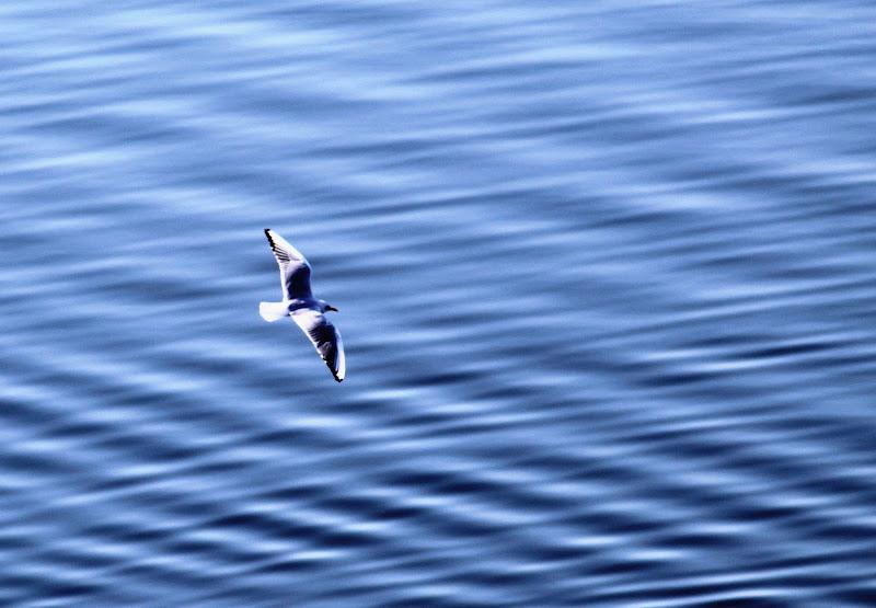Free Bird di FZATOX