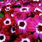 03:25:15 Flowers--edit copy.jpg