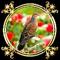 Burung Perkutut icon