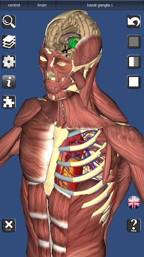 3D Bones and Organs (Anatomy) 3.1.0 screenshots 3