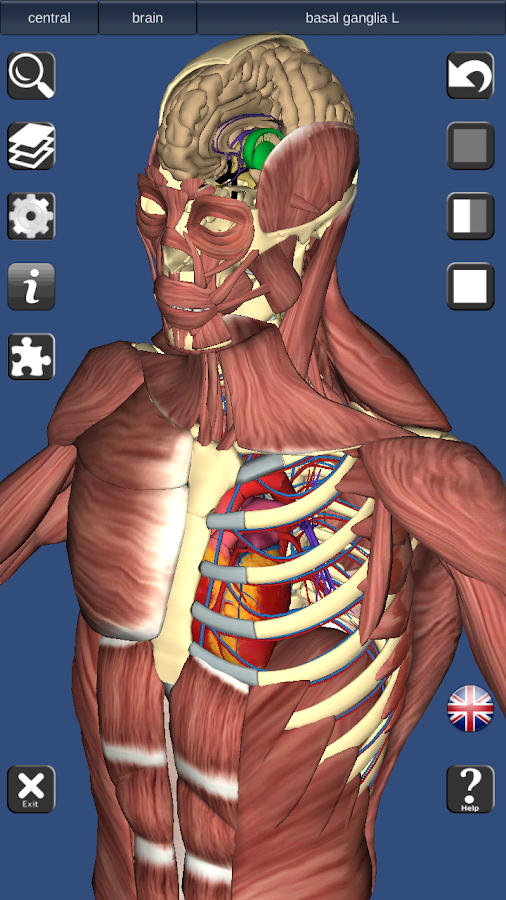 3d bones and organs (anatomy) - android apps on google play, Muscles