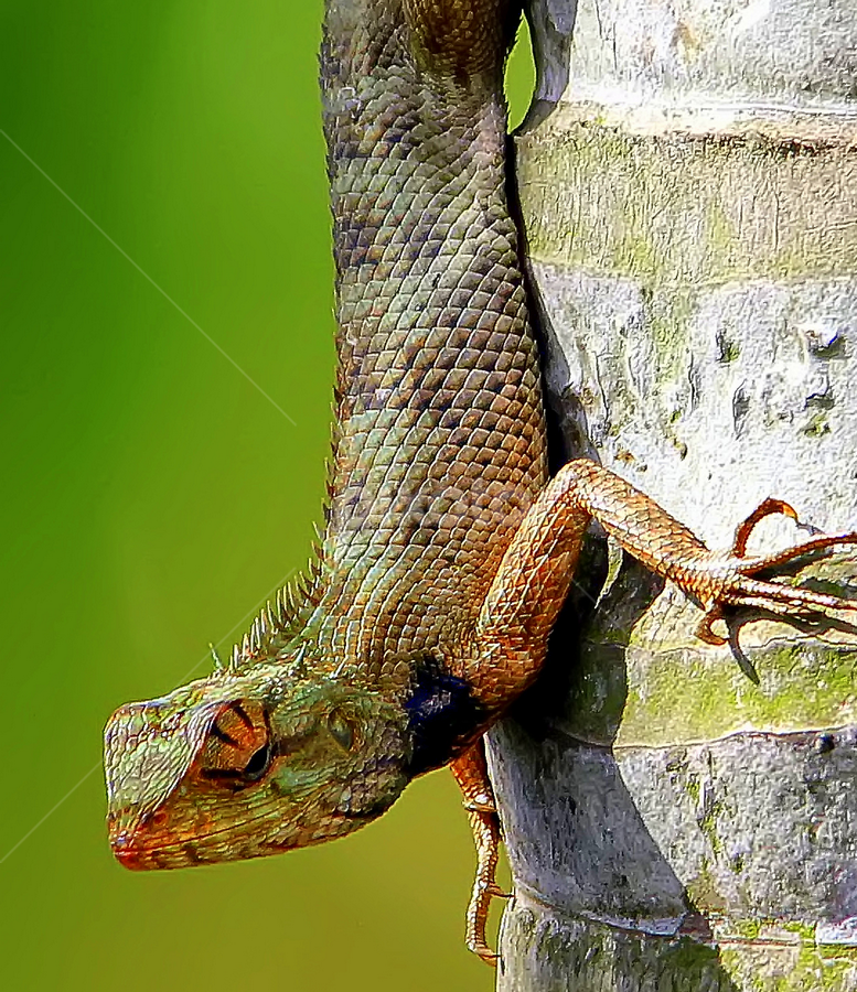 by Kanchan D - Animals Reptiles