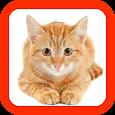 Cat Sounds Button icon