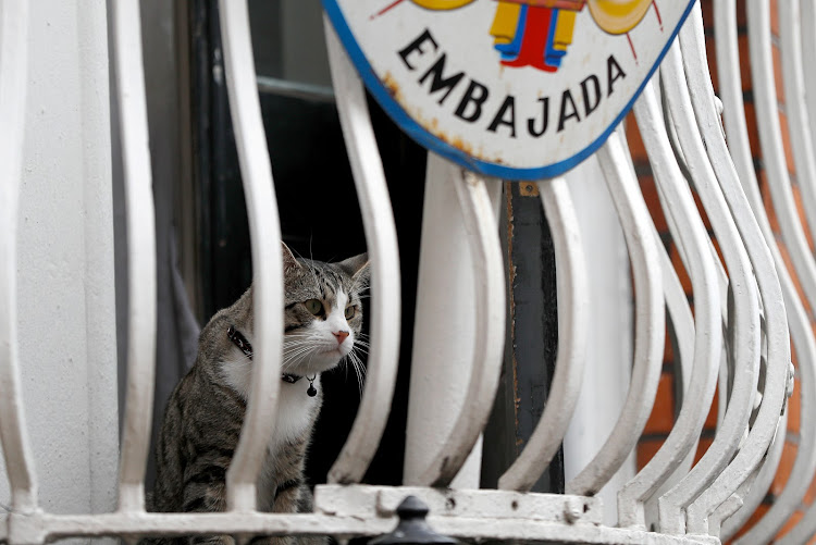 Julian Assange's cat sits on the balcony of Ecuador's embassy in London.
