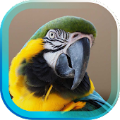 Tropic Parrot live wallpaper