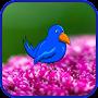 Blue Bird Journey In Flowers