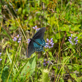 Old Mt. Mitchell Trail by Sabastian L - Flowers Flowers in the Wild ( butterfly, wildlife, flowers, north carolina )
