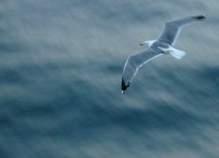Libero....in volo... di Edgar_Poe