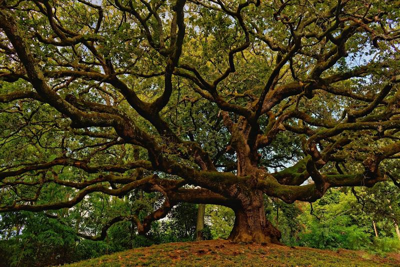 THE WITCHES TREE di MaurizioMarchetti