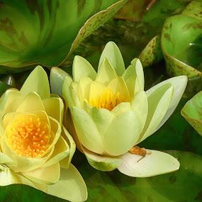 by Ksenija Bauer - Flowers Flowers in the Wild