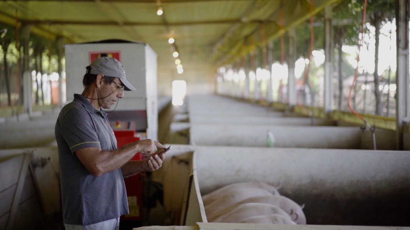 Produtor deixa de lado trabalho pesado para se tornar gestor do processo de criação de porcos. (Fonte: Roboagro/Divulgação)