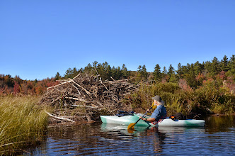 Photo: Kayaking to a beaver lodge at Lowell Lake State Park by Linda Carlsen-Sperry.