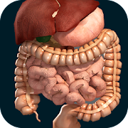 App Internal Organs in 3D (Anatomy) APK for Windows Phone