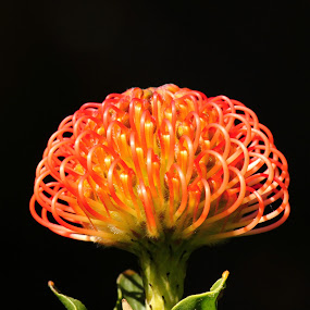 by Mike Gonzales - Nature Up Close Flowers - 2011-2013