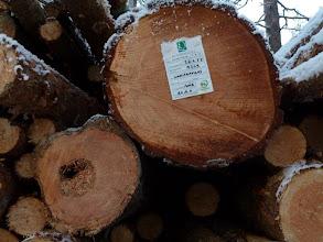Photo: Hossa 29.11.2011. Lahoa puuta matkalla kattilaan. Kuva: Lea Vainio.