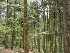 Photo: vert tendre des feuilles nouvelles