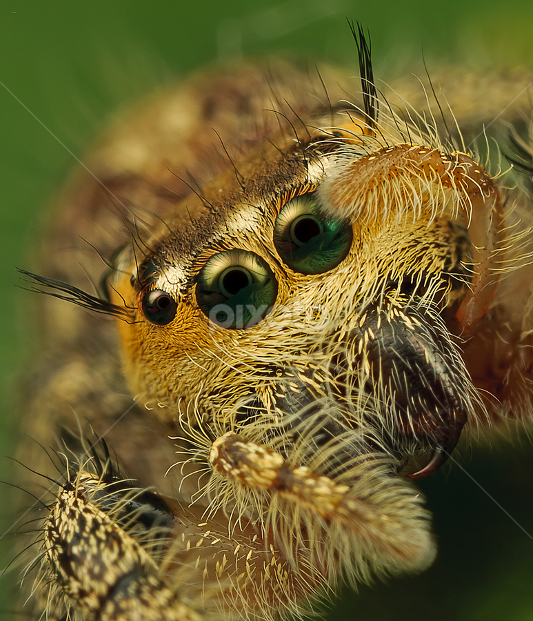 by Ara Rahman - Animals Insects & Spiders
