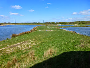 Photo: Dearne Valley Reserve
