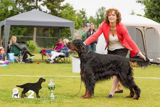Photo: Kampioensklas reuen / Championclass dogs - Liric Xcaliber