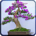 Japanese Bonsai Design icon
