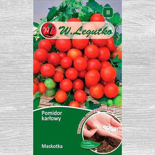 Pomidor gruntowy karłowy  Maskotka  obraz 1