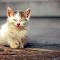 Homeless little cat on stairs.jpg