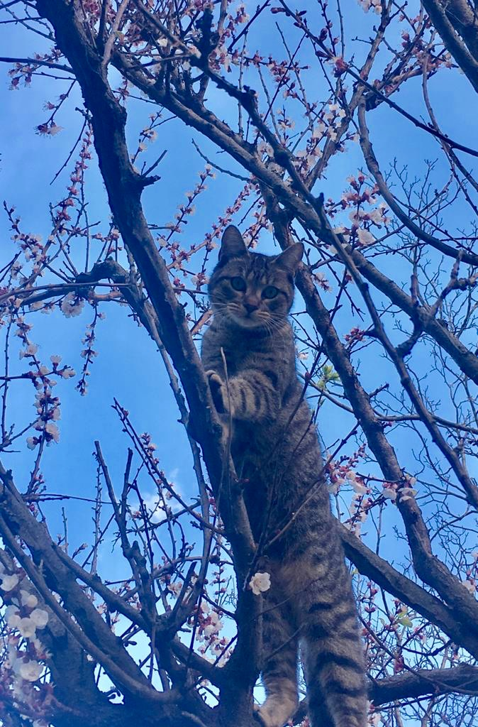 Su e giù dall'albero di  Antonella Giuliani