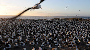 Falkland Island Invasion thumbnail
