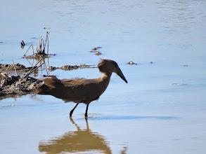 Photo: unknown water bird