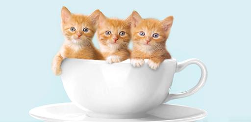 Kitten Wallpapers APK App - Free