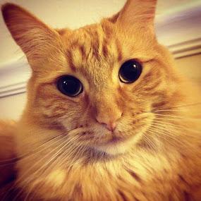 Felix the Cat by Tyler Landgraf - Instagram & Mobile Instagram ( cat, kitten, pet, feline )