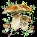 Mushrooms app icon