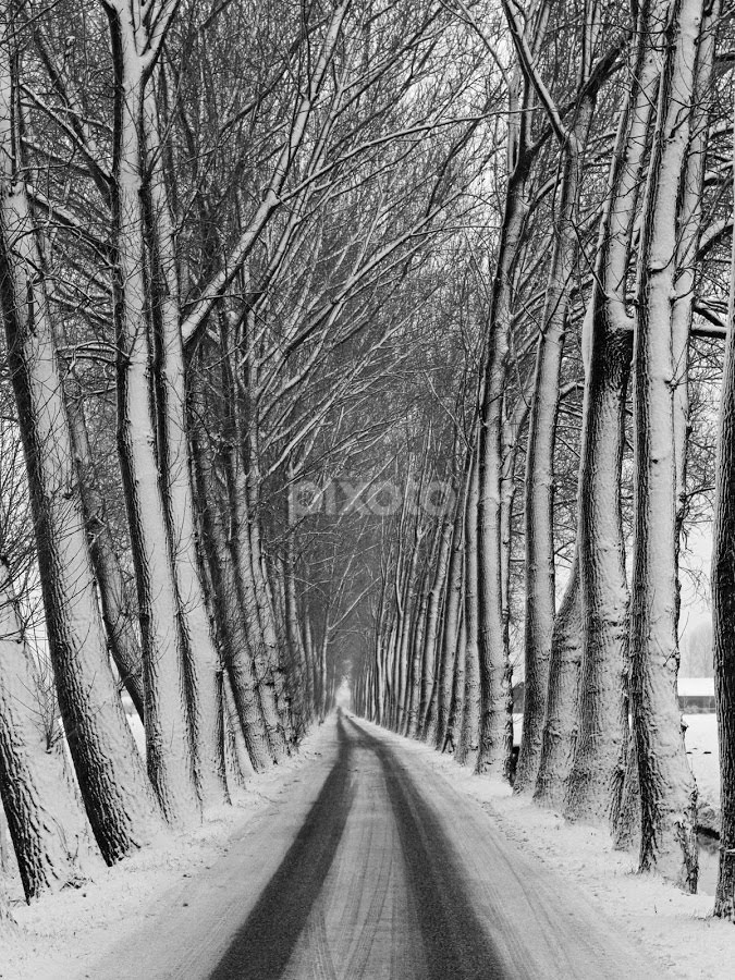 Winter road by BertJan Niezing - Landscapes Weather ( black and white,  )