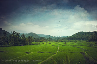 Photo: #landscape #Bali #impressionisic  Rice Fields, Bali, Indonesia more travel shots: http://wuestenhagen-imagery.photoshelter.com/gallery-collection/Travels/C0000_t0BzdtmfZY