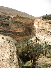 Photo: The oasis of Mides on the border with Algeria