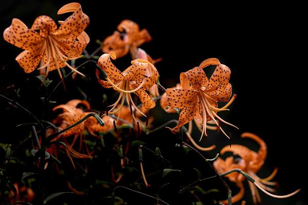 cascata di fiori di AZ_photos