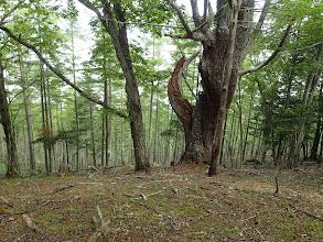 暫くは明るい林の中を進む