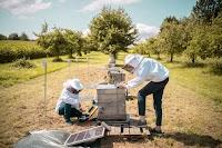 Les apiculteurs KatharinaSchmidt et FredericTausch en train de travailler sur un moniteur pour ruche