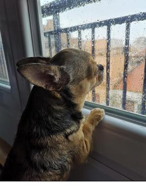 Piove. Mi sa che non si esce...!! di vindesa64