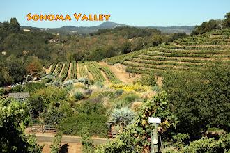 Photo: Sonoma Vineyards