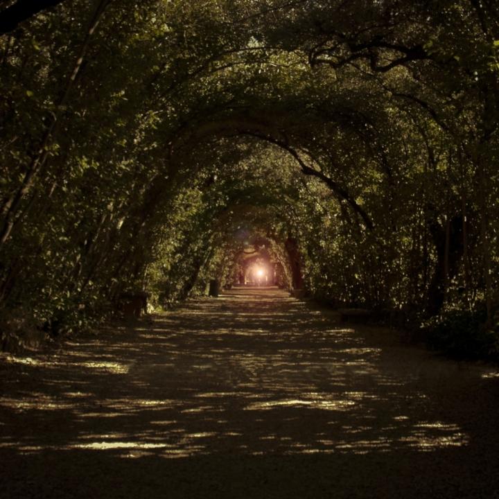 Il tunnel nel bosco di Andrea Frati