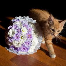 Wedding photographer Aleksandr Yacenko (Yats). Photo of 18.07.2013