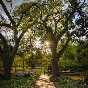 Hopeland Gardens by Michael Shaffer - City,  Street & Park  City Parks ( hopeland gardens, hopelands garden, michael shaffer, sc, hopelands gardens, michaeshaffer77, aiken )