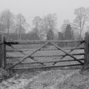 by Matt Gullick - Novices Only Wildlife ( black and white, b and w, landscape, b&w, monotone, mono-tone,  )
