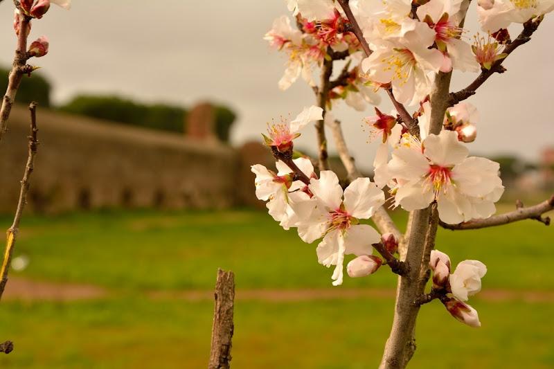 L'essenza della primavera.  di FotografoPerCaso