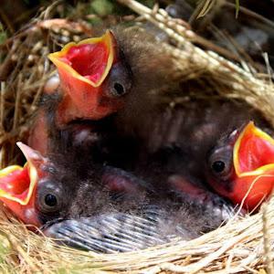 babybirdsNOwatermark.jpg