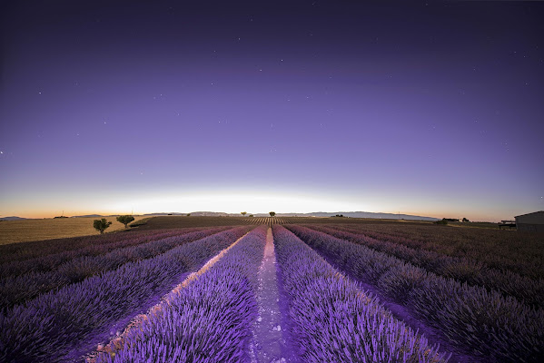 Lavanda di S-RAW PhotoArt